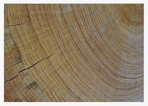 WONDERFUL WOOD, SUSTAINABLY SOURCED…