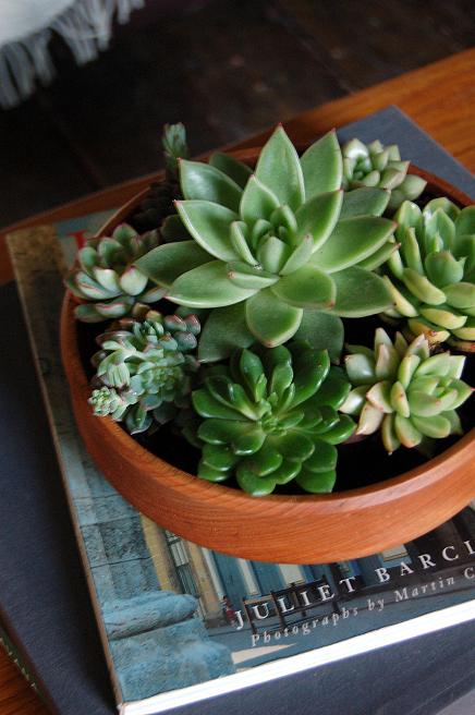 Cacti & Succulents AB1