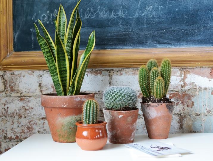 Cacti & Succulents_10