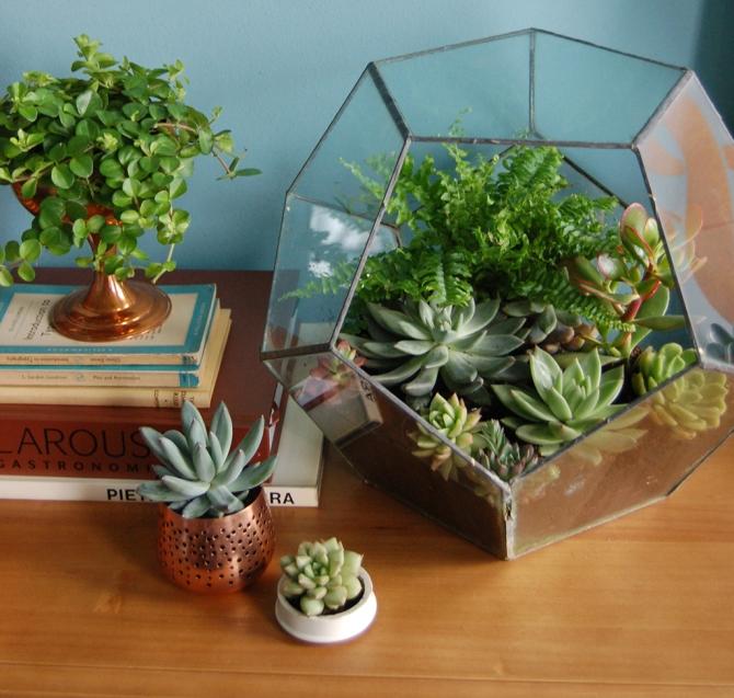 Cacti & Succulents_5