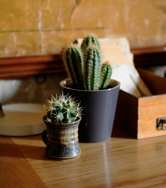 Cacti & Succulents_7