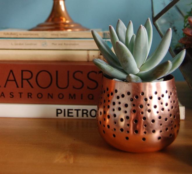 Cacti & Succulents_8