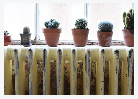 CARING FOR CACTI & SUCCULENTS