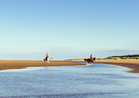 Beach Proud, Holkham beach, Holkham, Norfolk, Horses