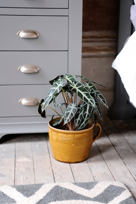 Floor, plant, mustard pot, grey furniture, grey bedroom furniture