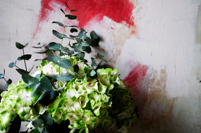 hydrangers, Flowers, styling, painted wall