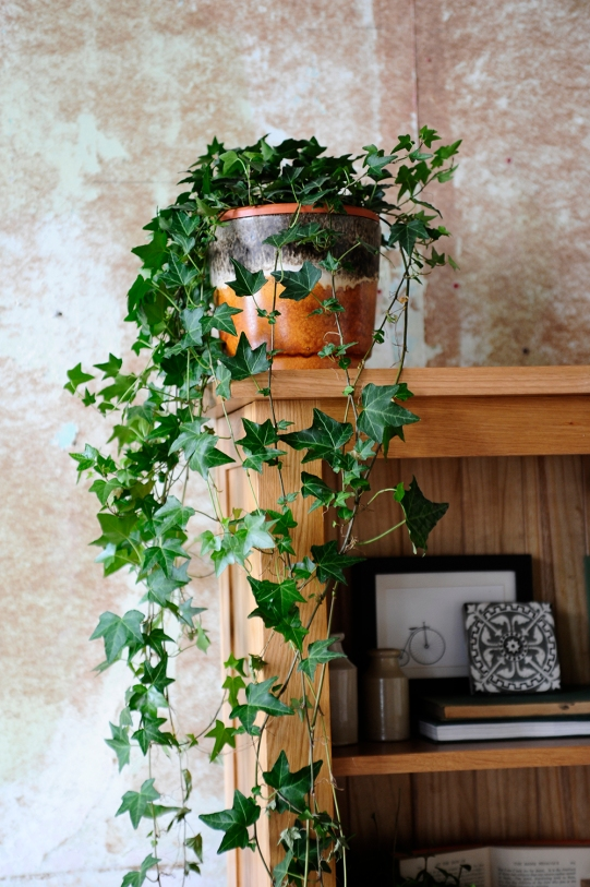 Ivy, oak bookcas, styling, vintage ceramics, rustic wall