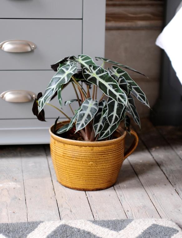 Plant, mustard pot, grey floors, grey furniture, grey rug2