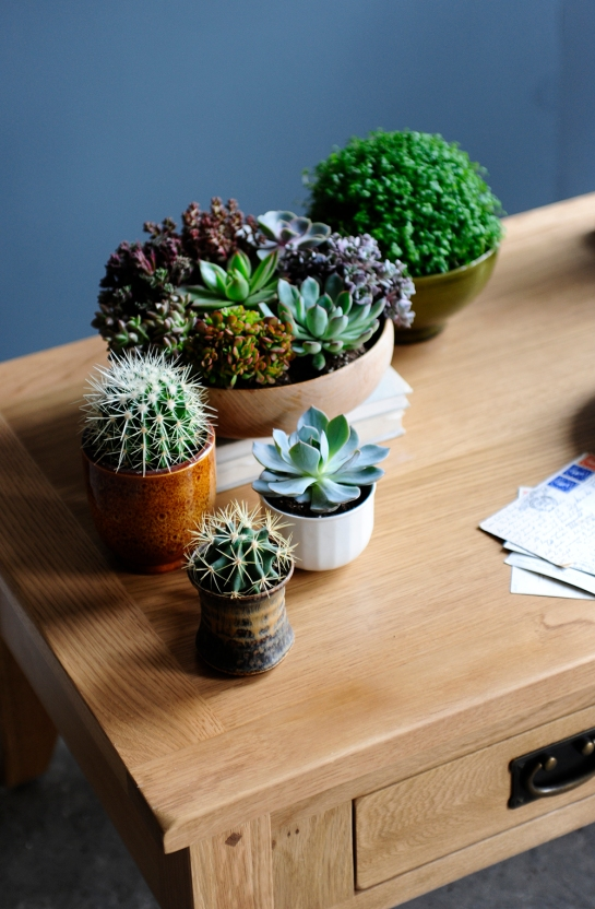 Succulents, cactus, cacti, oak, blue wall, coffee table