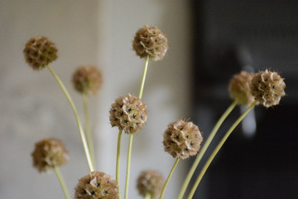 Seedheads, photography, styling