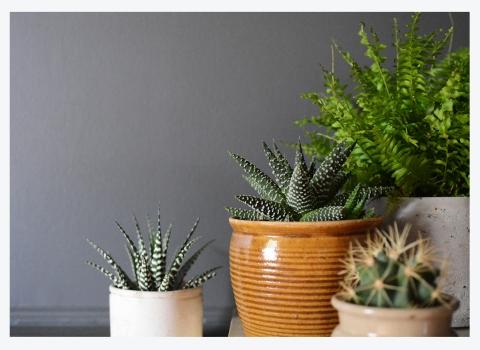 HEAVENLY HOUSE PLANTS
